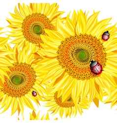 Sunflower background with ladybugs vector