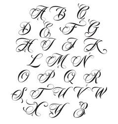 calligraphy alphabet vector image