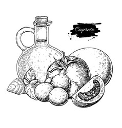 Caprese salad ingredients drawing vector