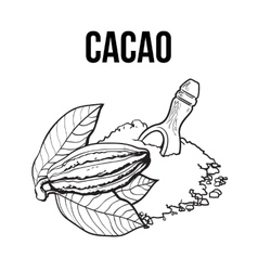 Heap of cocoa powder with wooden scoop and cacao vector image