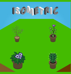 Isometric flower set of flowerpot peyote flower vector