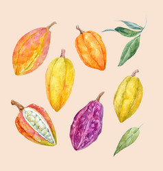 Watercolor cacao fruits set vector