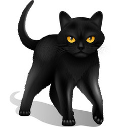 Black cat realistic vector
