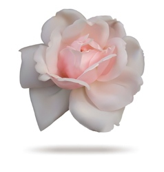 Pink rosebud isolated on white top vector