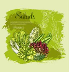 Poster salads or leafy lettuce vegetables vector