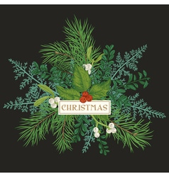 Greeting card with pine branches holly berries vector image