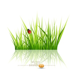 grass with ladybird vector image