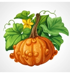 Beautifu orange Halloween pumpkin with green vector image