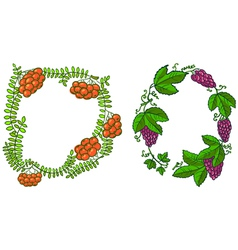Rowan and grape vector