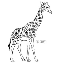 Giraffe goes vector