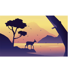 At the morning deer scenery silhuoette vector