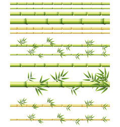 Different sizes of bamboo stems with and without vector