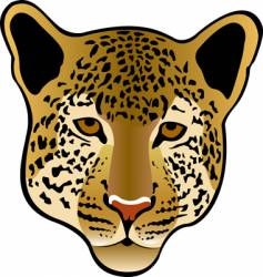 leopard cat vector image