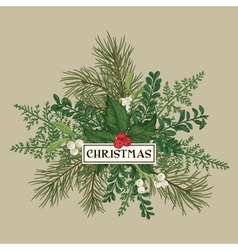 Greeting card with pine branches holly berries vector