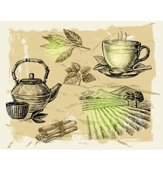 hand drawn tea vector image vector image