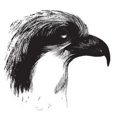 Head of an osprey vintage vector