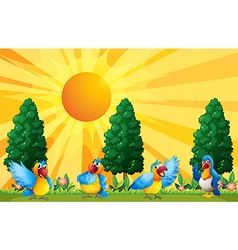 Parrots in the field vector