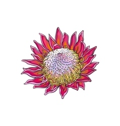 Single purple colored king protea sketch vector