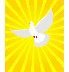 White dove in sunny radiance divine light and vector