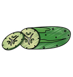 drawing cucumber food nutrition vector image vector image