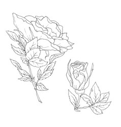 set of detailed isolated outline rose bud vector image vector image