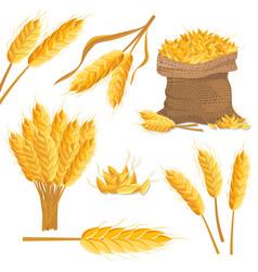 Cartoon wheat isolated set vector