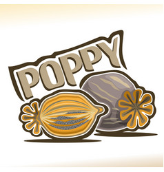 poppy pod vector image