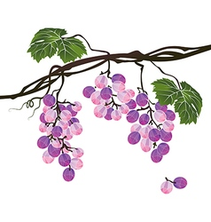 Stylized polygonal branch of purple grapes vector