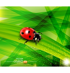ladybug on the background vector image