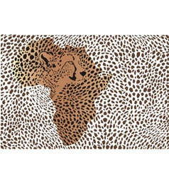 Abstract background of the African cheetah vector image vector image