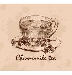 Chamomile tea vector