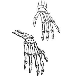 Skeleton hands vector