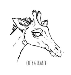Head of a giraffe vector