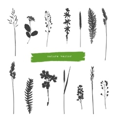 Summer herbs silhouettes vector