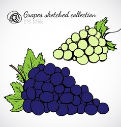 Grape hand drawn vector