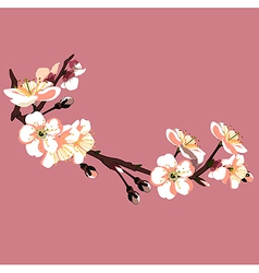sakura flower on red background vector image