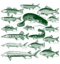 freshwater fiash vector image