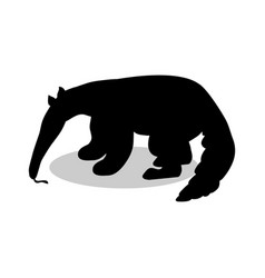 Anteater mammal black silhouette animal vector