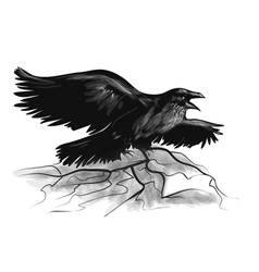raven on white vector image