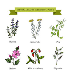 vintage collection of medical herbs vector image