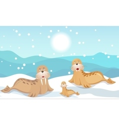 Walrus family vector