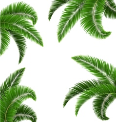 Green palm tree leaves isolated on white vector