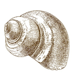 Engraving snail shell vector