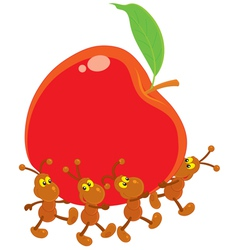 ants carrying a red apple vector image vector image