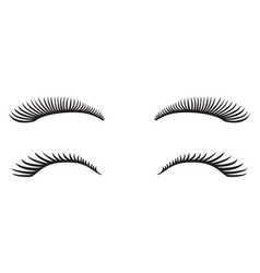 eyelashes design vector image