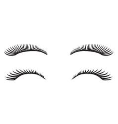 eyelashes design vector image vector image