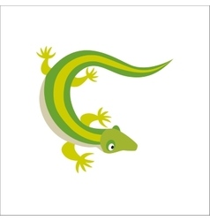 Chinese water dragon lizard vector