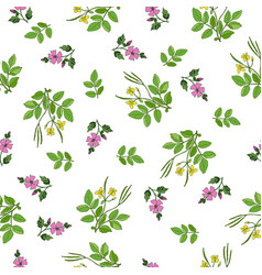 Seamless pattern with hand drawn medicinal plants vector