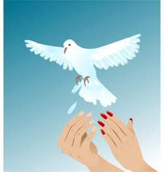 Hands of woman and man setting free white peigeon vector image