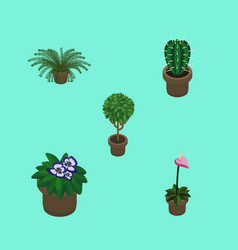 Isometric plant set of grower plant peyote and vector